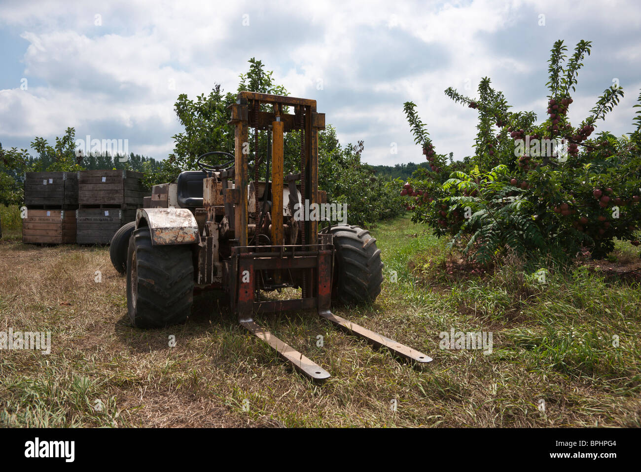 Apple harvest lift tractor wooden crates full of apples on branches trees orchard nobody not people from above in Stock Photo