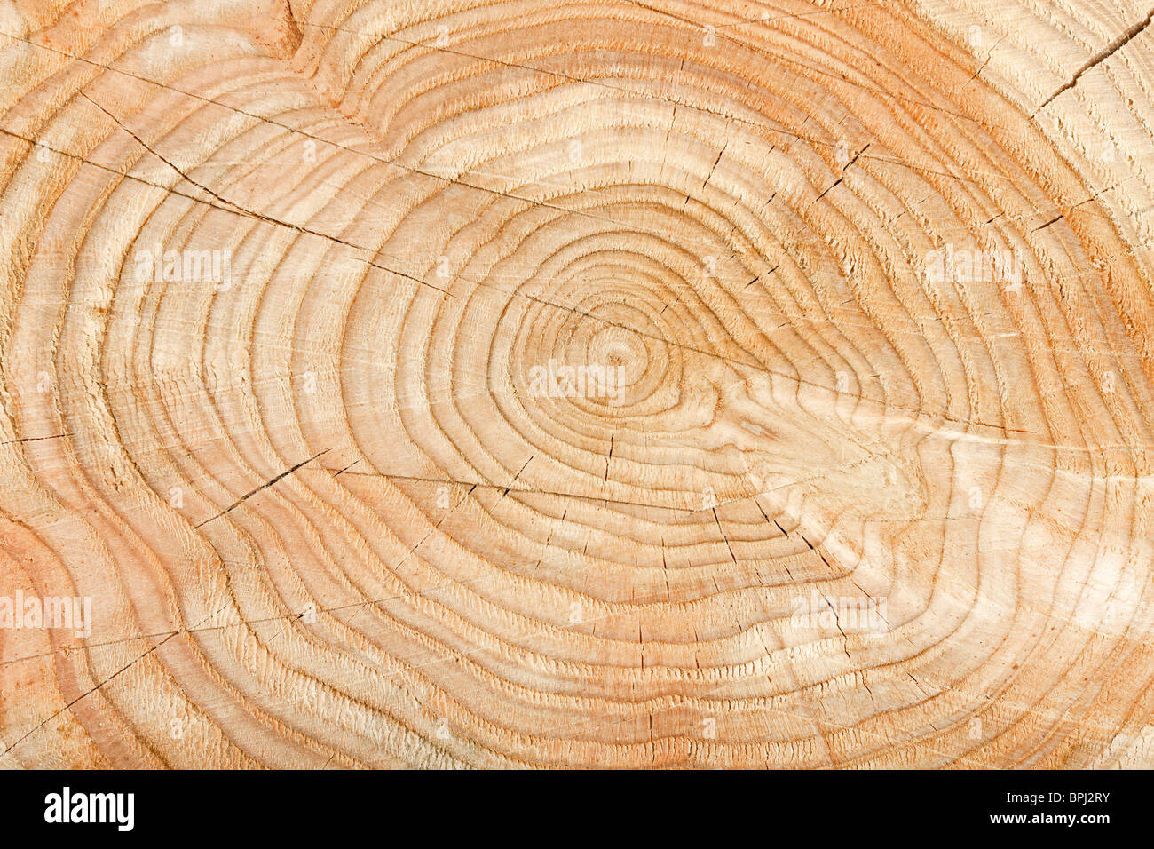 Close-up of a cross section of a tree stump showing aging circles - Stock Image