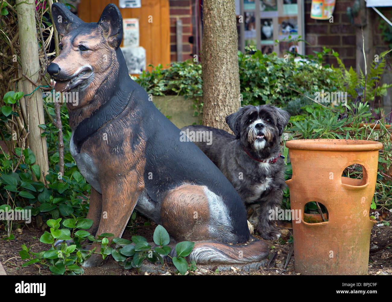 Little Shih Tzu Dog Standing Beside Garden Statue Of A German Shepherd