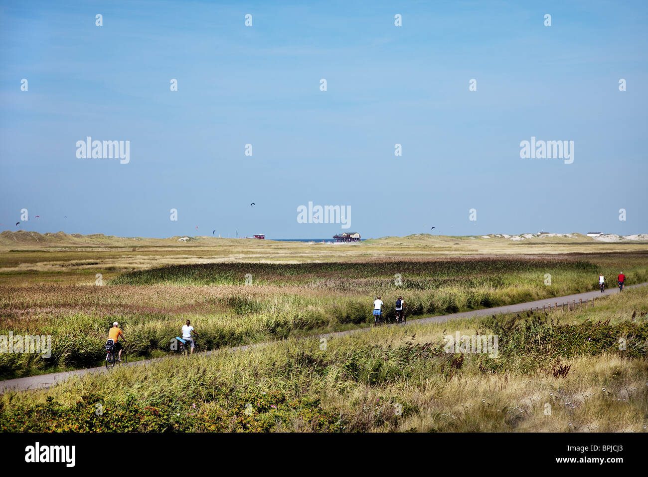 Cycle way through dunes, St. Peter-Ording, Schleswig-Holstein, Germany - Stock Image