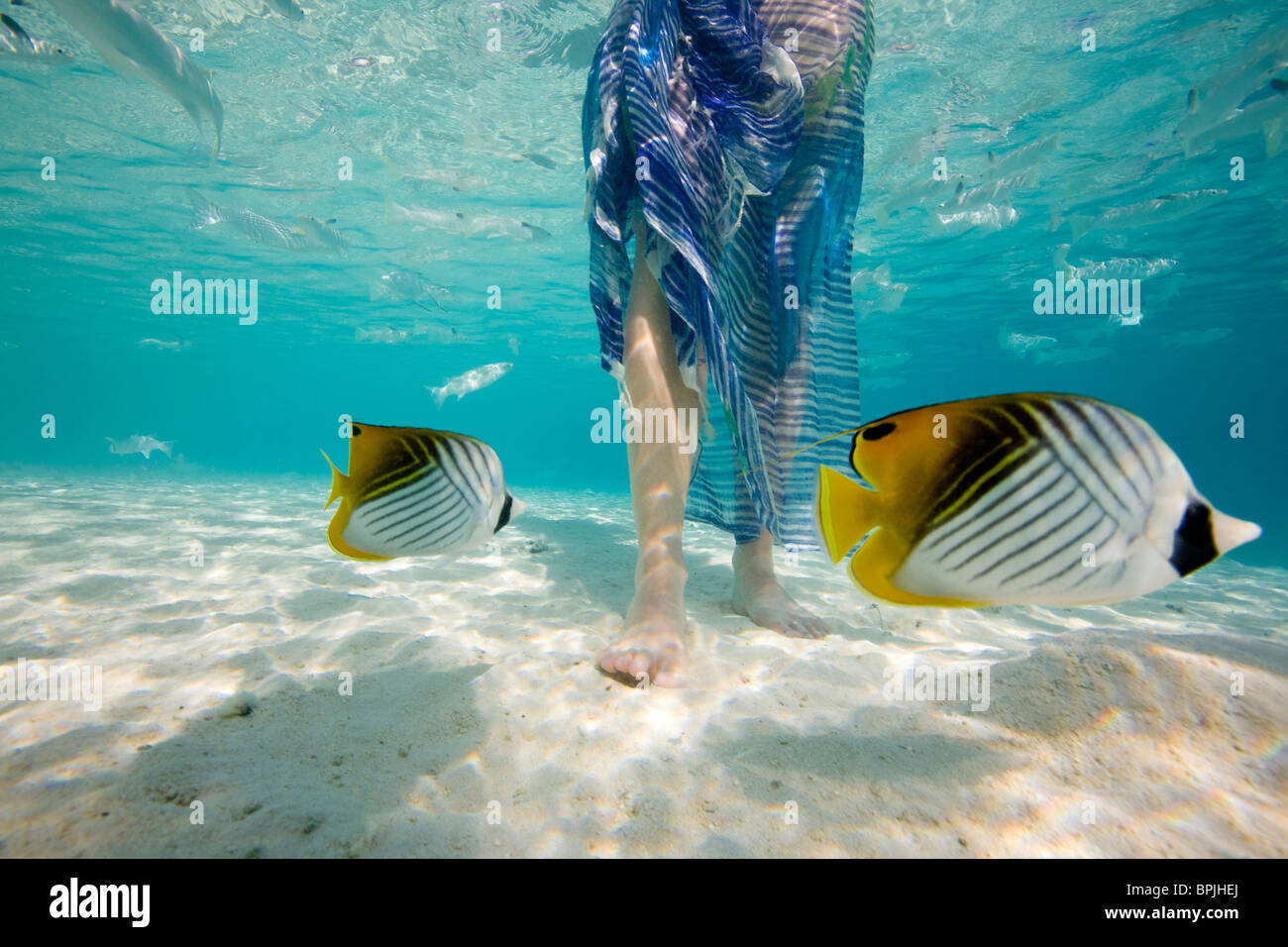 South Pacific, Bora Bora, female tourist walking in ocean. - Stock Image