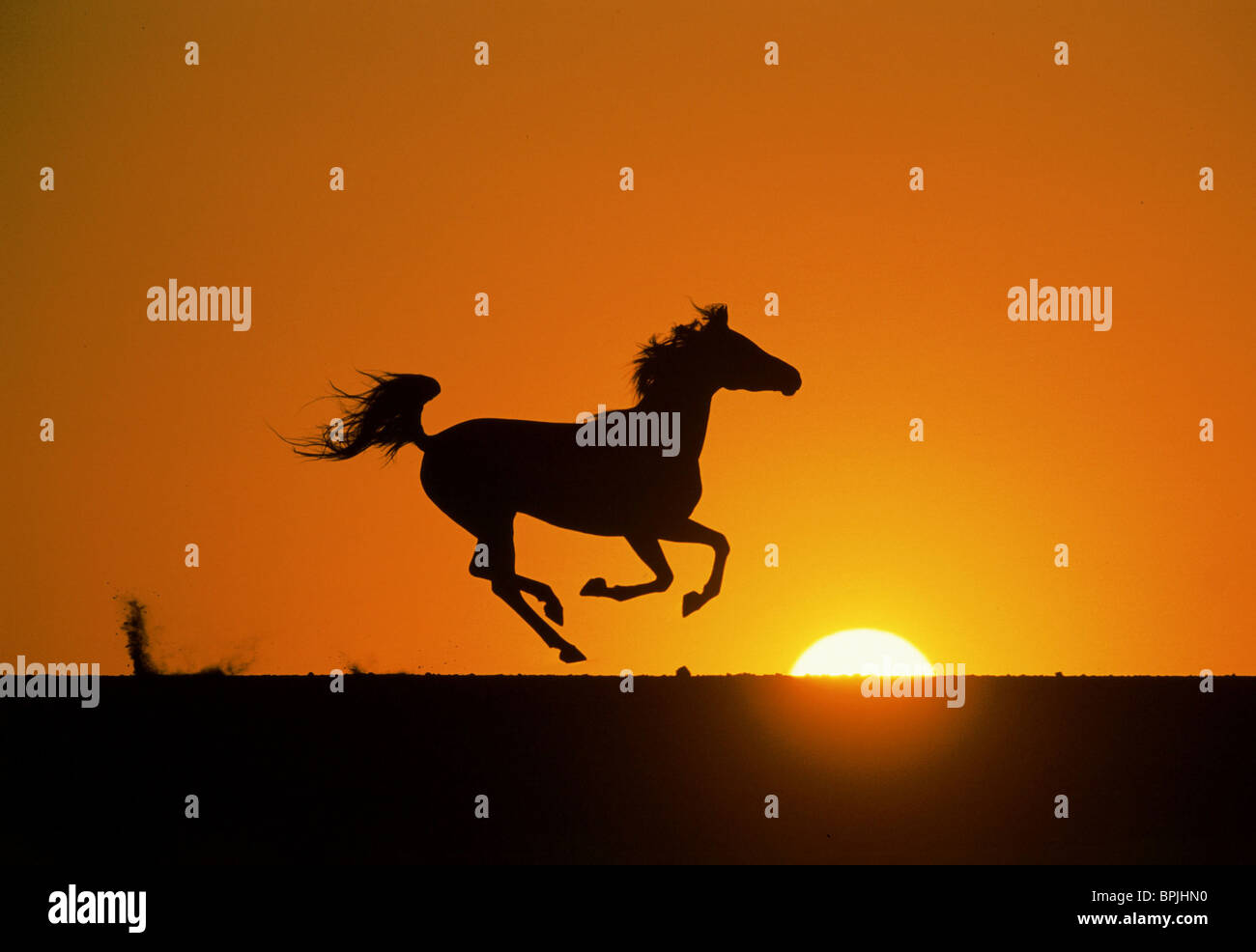 THE BLACK STALLION IN SUNSET THE YOUNG BLACK STALLION (2003) - Stock Image