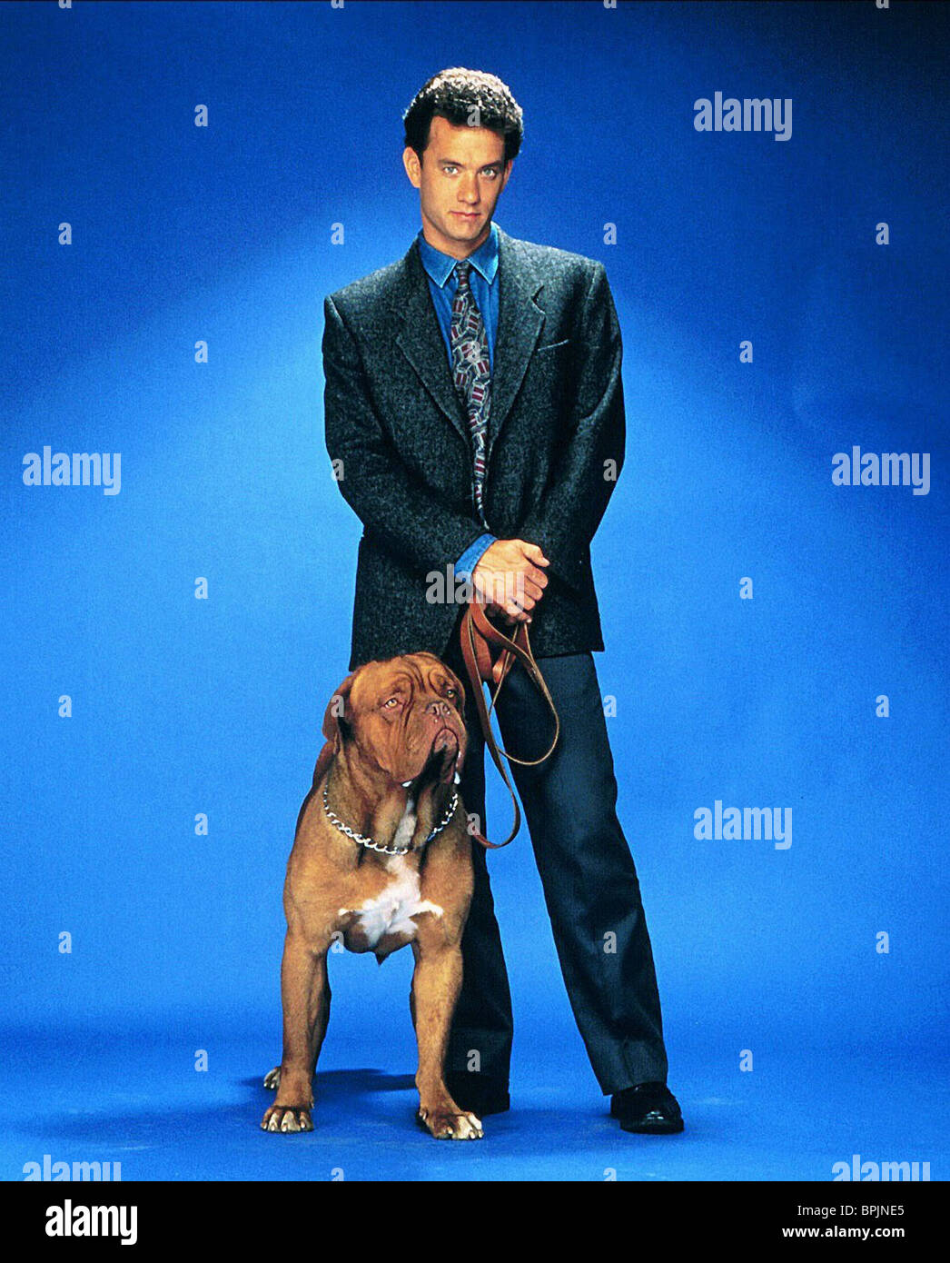 Turner And Hooch Stock Photos & Turner And Hooch Stock ...