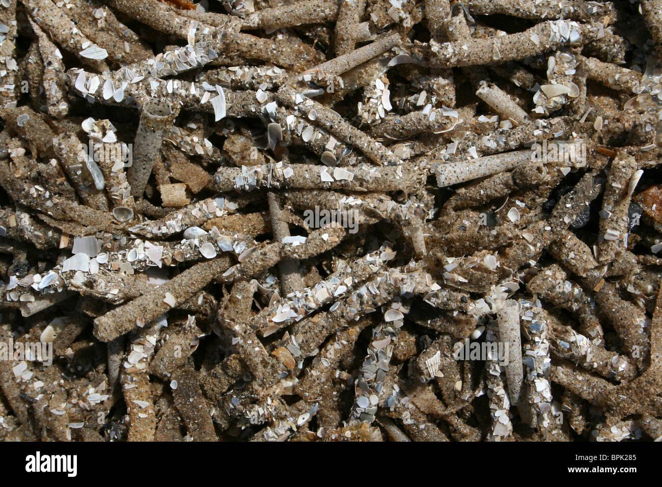 Sand Mason Worm Tubes Lanice conchilega Washed Up On Formby Beach, Sefton Coast, UK Stock Photo