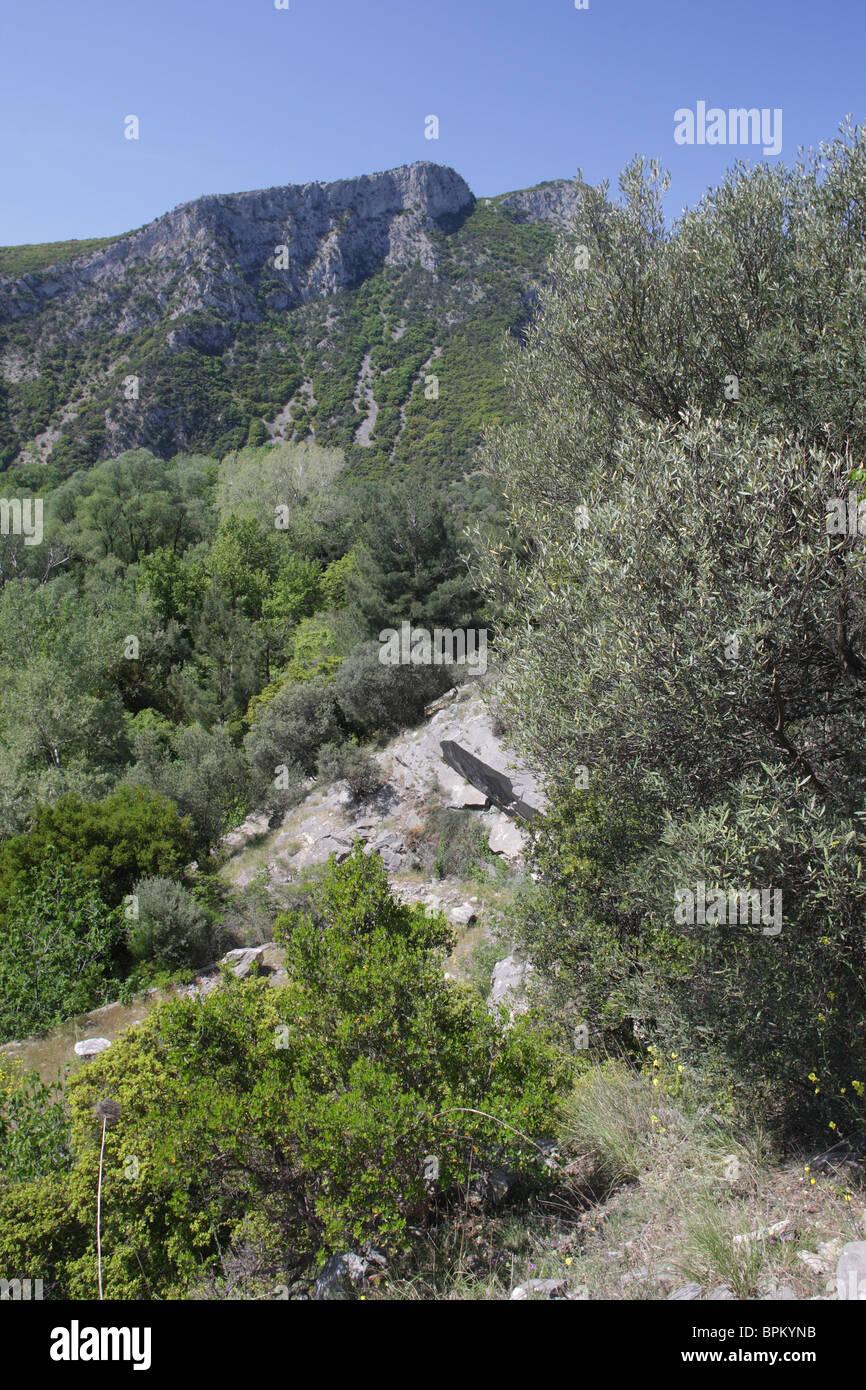 Nestos river, protected area 'Meanders of Nestos river', North Greece - Stock Image