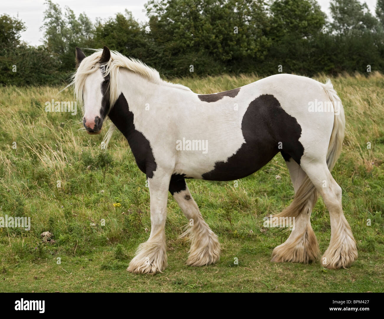 Travellers horse - Stock Image