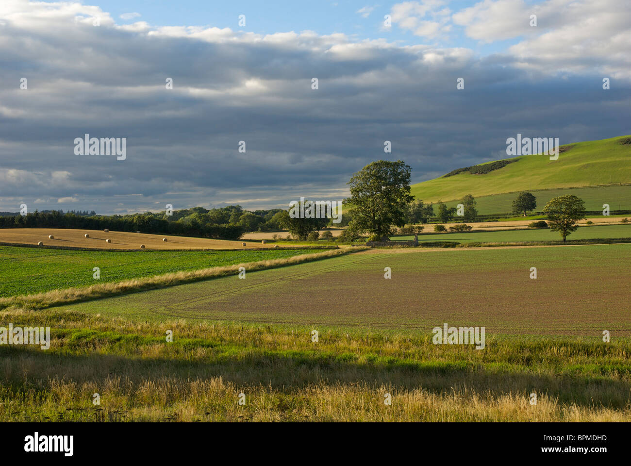 Agricultural landscape in the Scottish Borders, UK - Stock Image