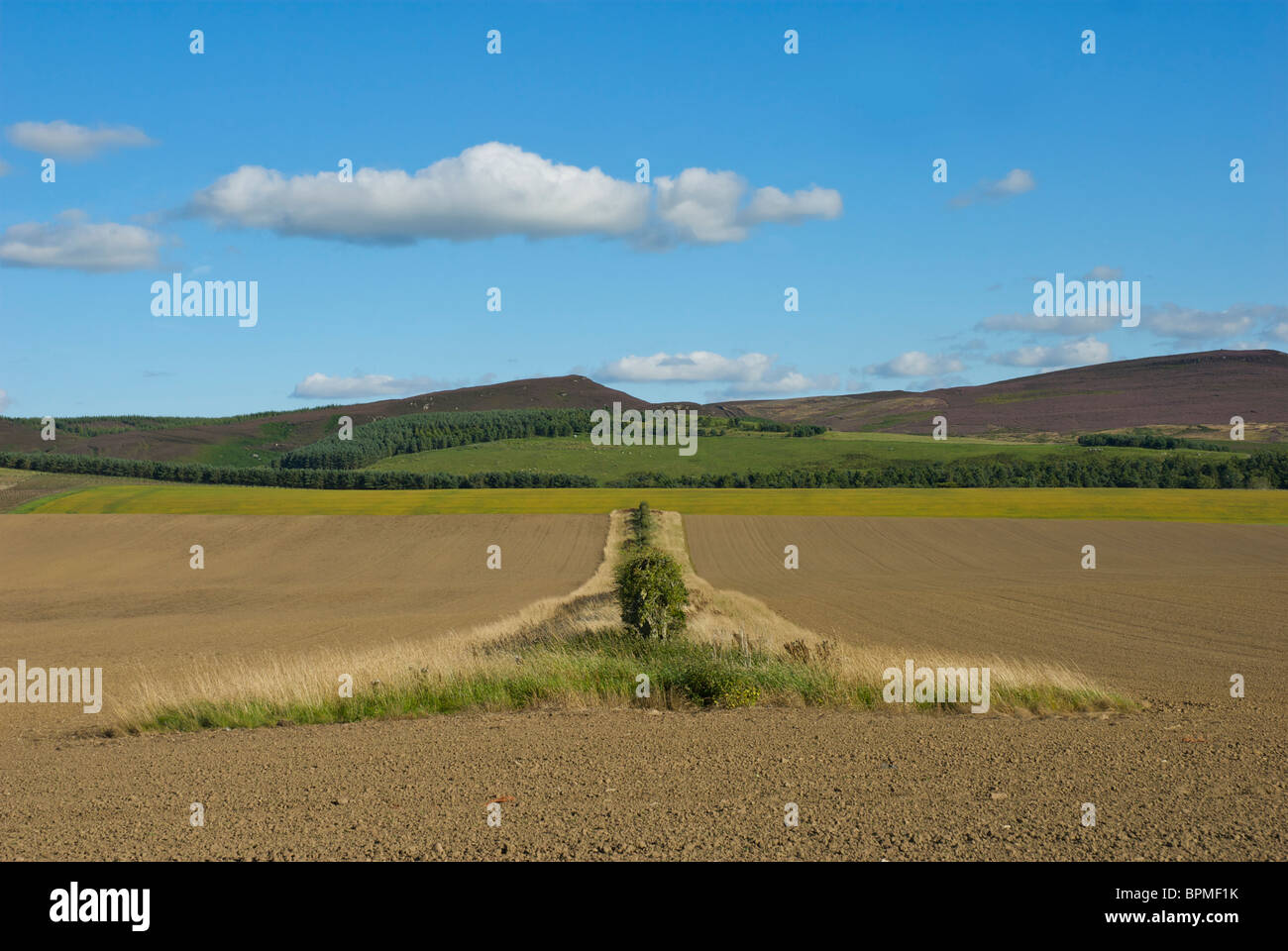 Field in the Scottish Borders, UK - Stock Image