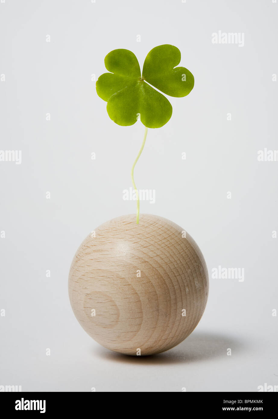 Wooden ball and clover - Stock Image