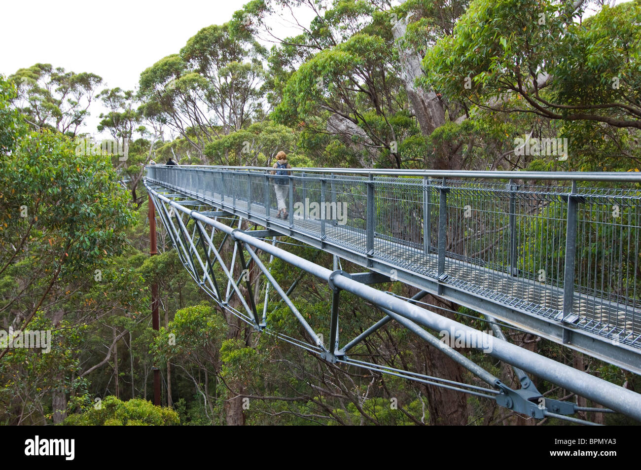 Valley of the Giants Tree Top Walk in Walpole-Nornalup National Park, Western Australia. - Stock Image