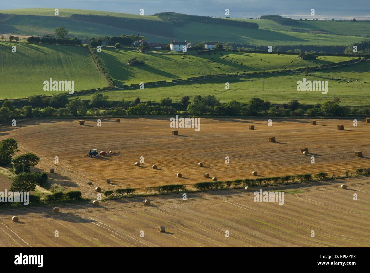Haymaking near Kirk Yetholm, Scottish Borders, Scotland, UK - Stock Image