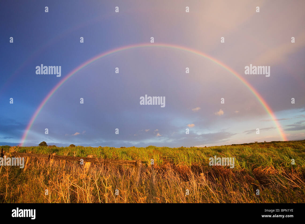 A semicircular double rainbow over a field of Elephant Grass in North Lincolnshire, England, UK - Stock Image