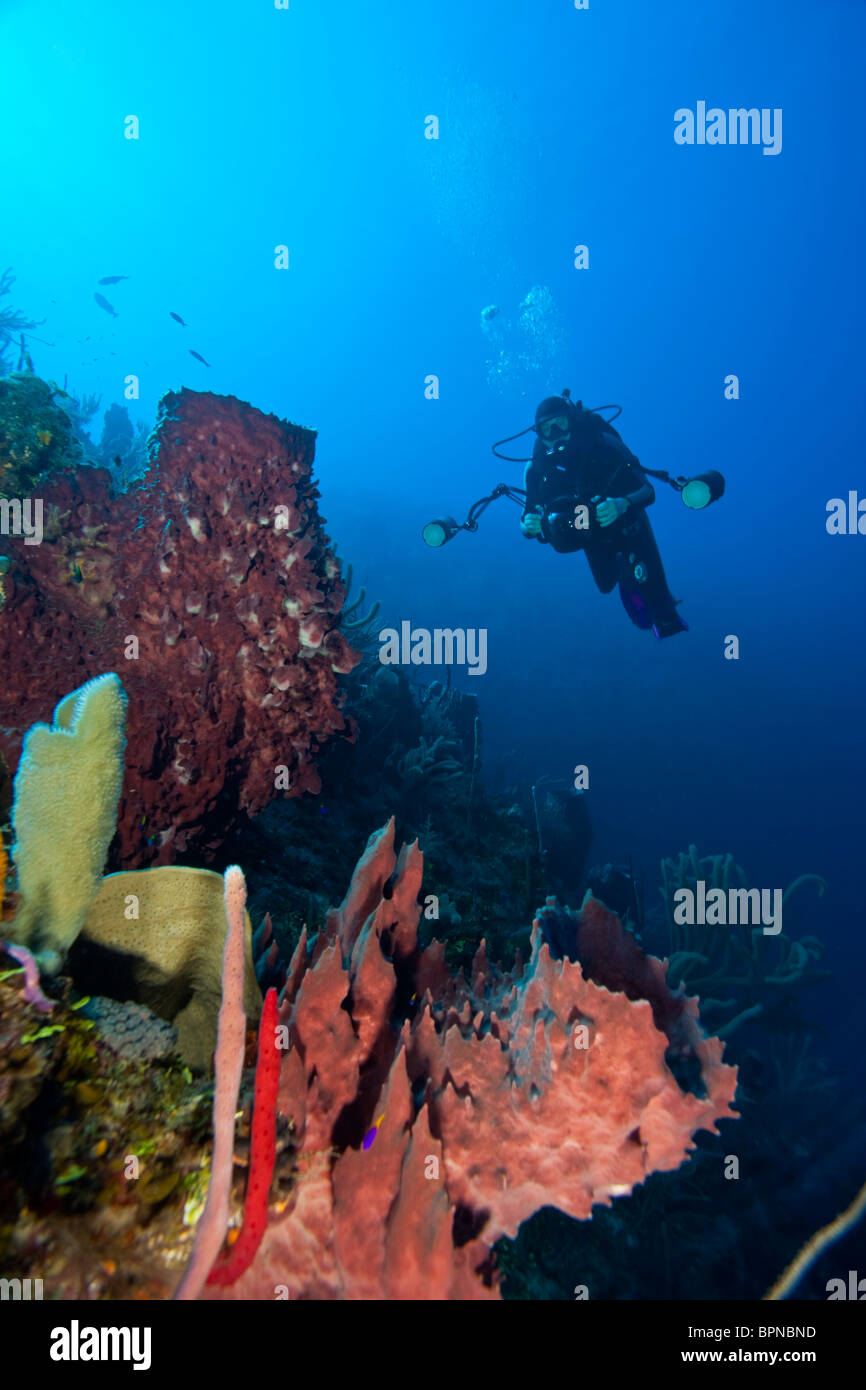 Scuba Divers with an underwater cmaera, Giant Barrel Sponges , Utila, Bay Islands, Honduras, Central America - Stock Image