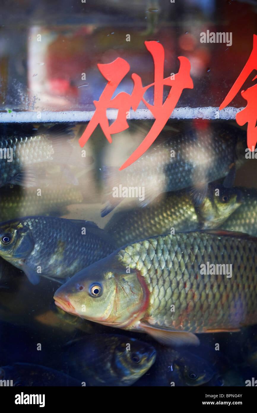 A Chinese fish tank at a restaurant in Dali, Yunnan provence. China. Asia. 2010 - Stock Image