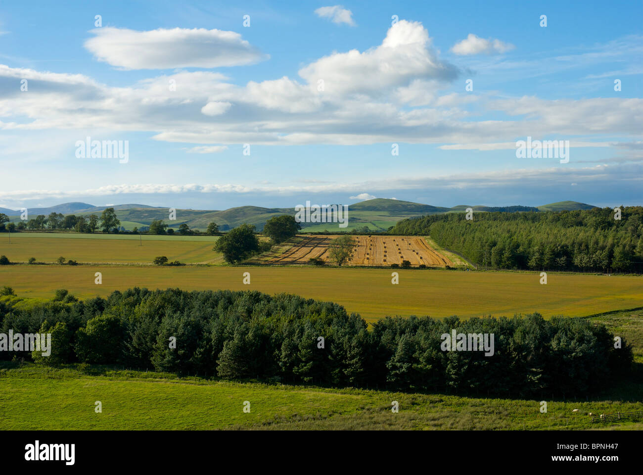 Hayfield near Kirk Yetholm, Scottish Borders, Scotland, UK - Stock Image