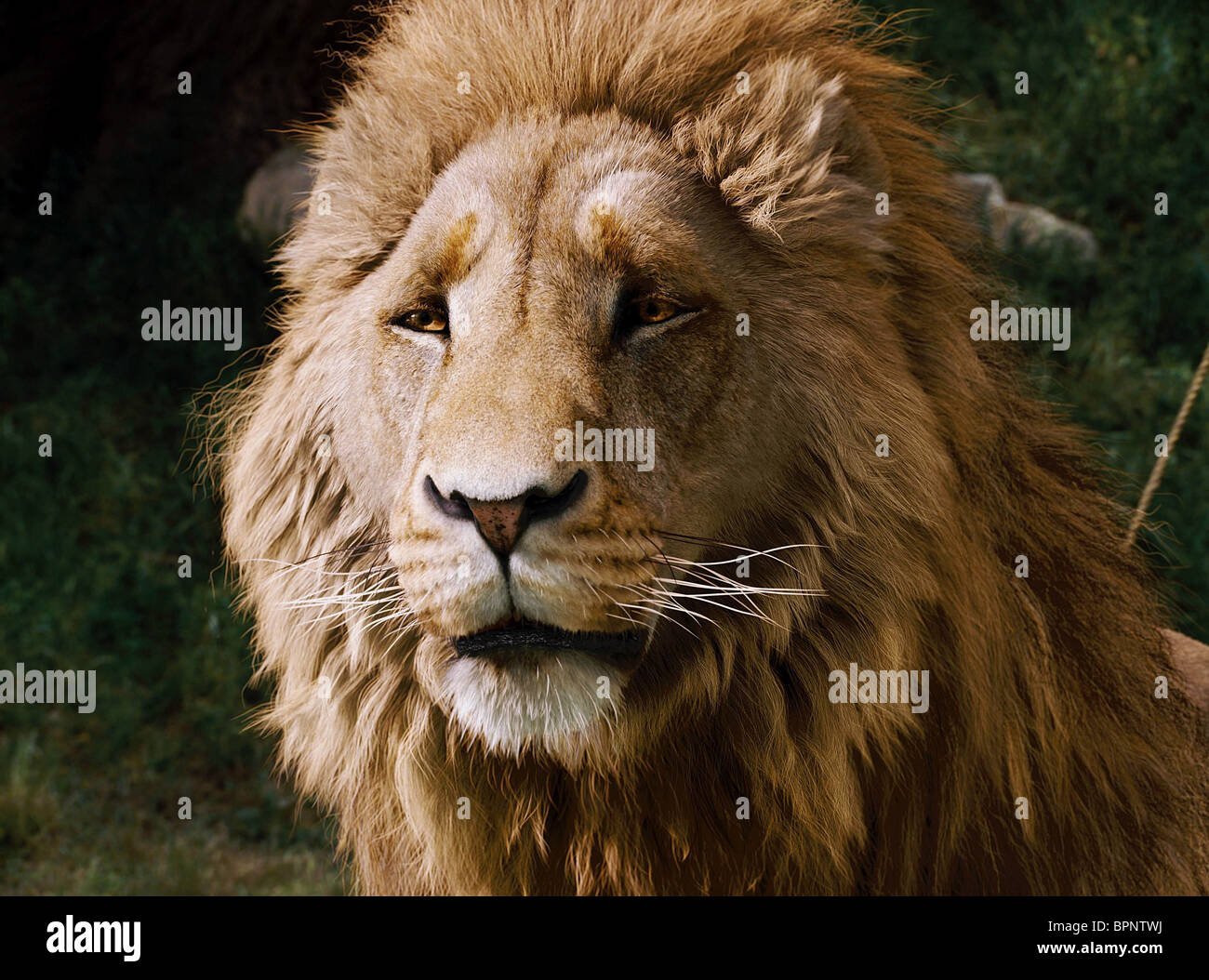 aslan the chronicles of narnia: the lion the witch and the wardrobe