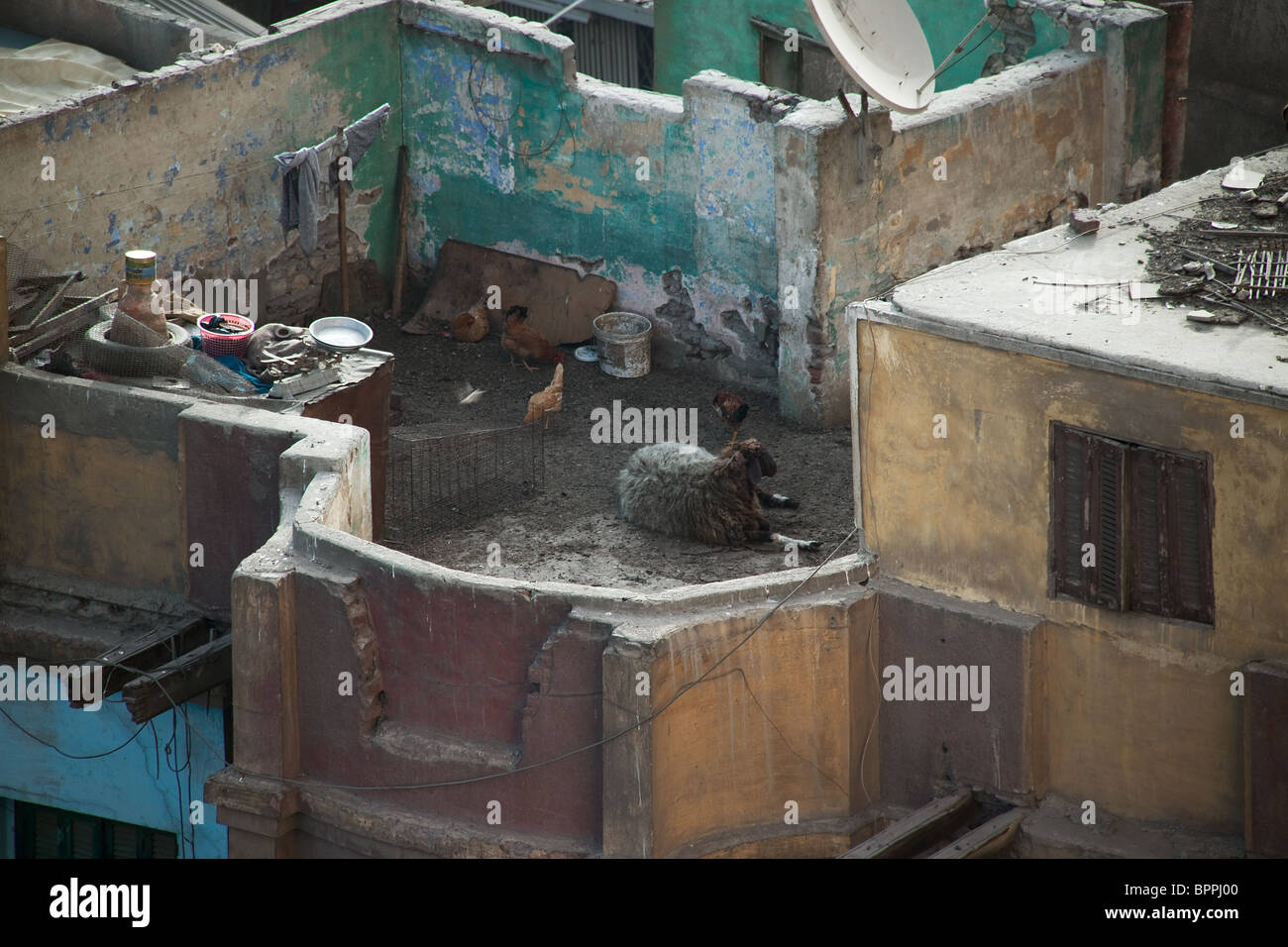 The roof of the Cairo in Egypte - Stock Image