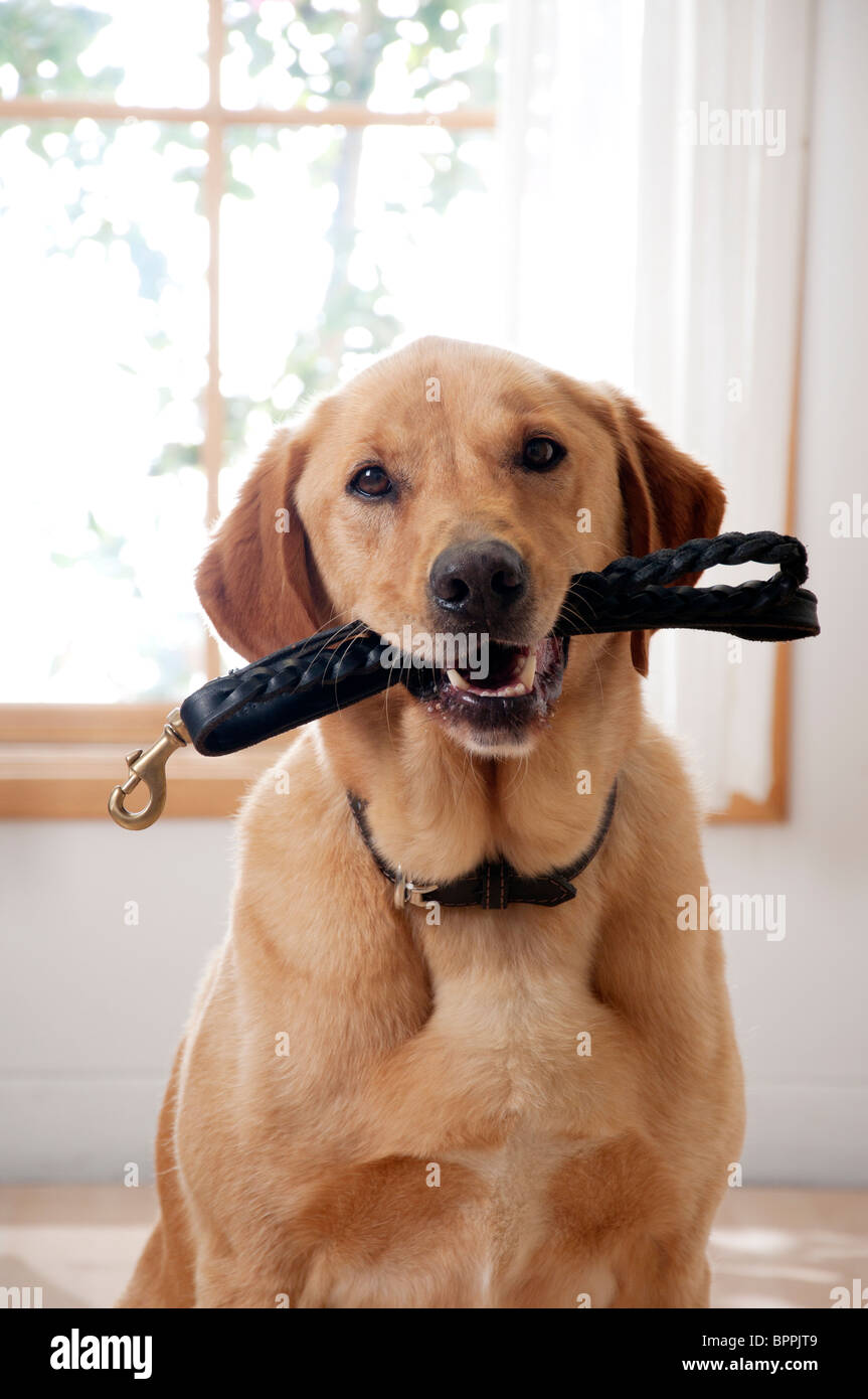 cute dog wants to go for a walk - Stock Image