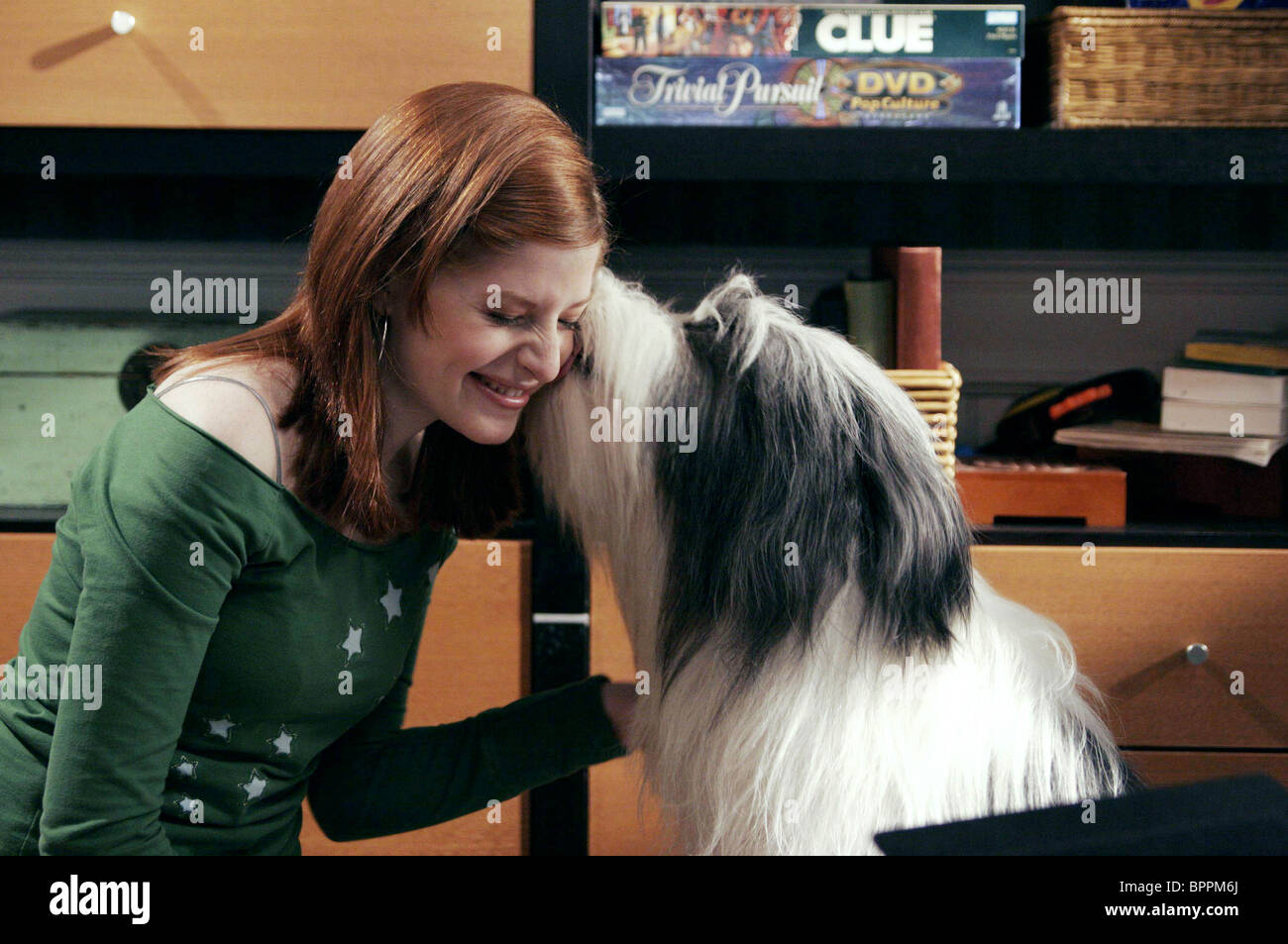 Zena Grey Sheepdog Thegy Dog 2006 Stock Image