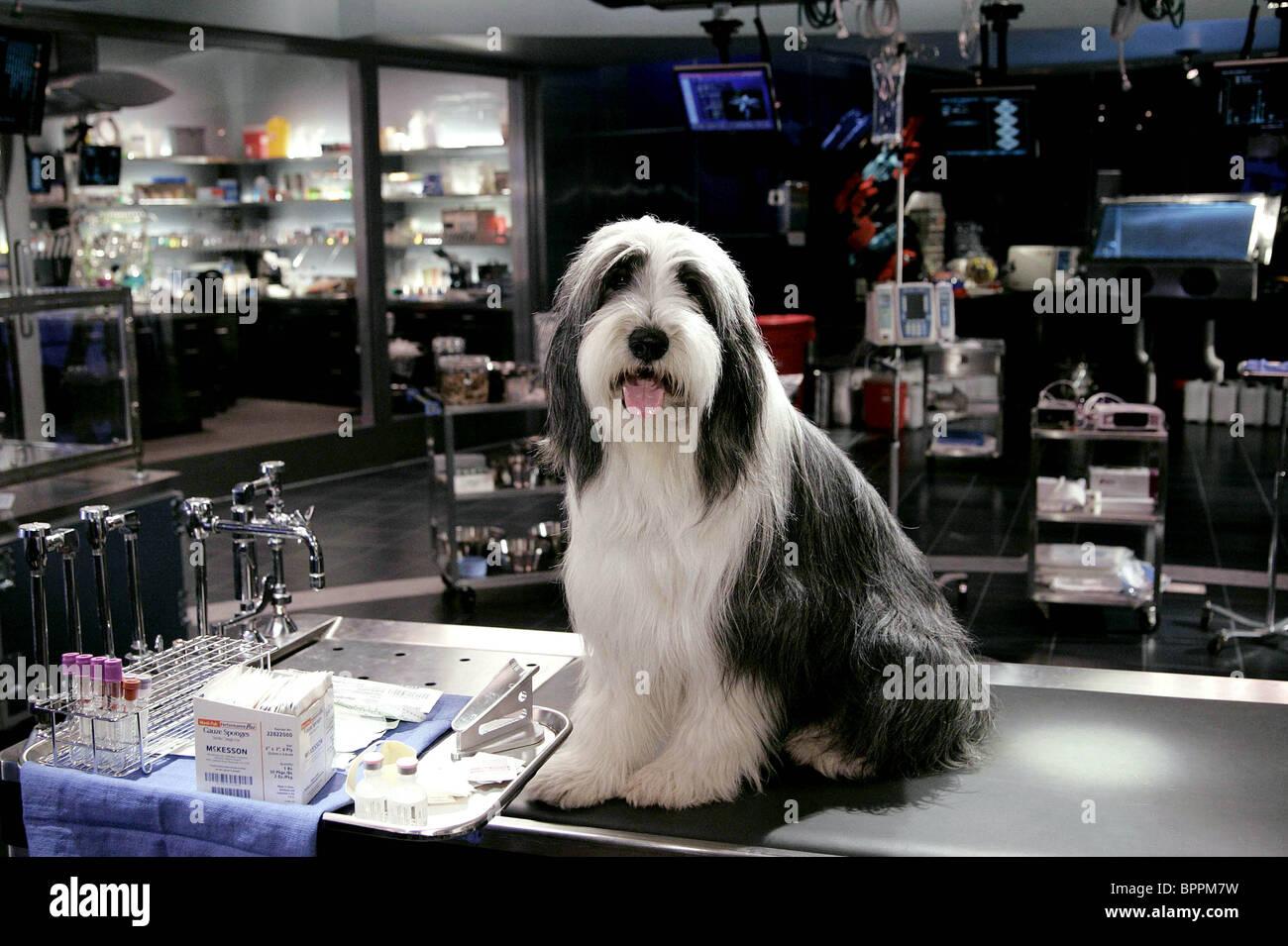 the shaggy dog (2006 film)