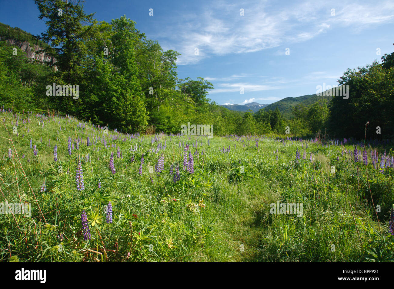 Crawford Notch State Park during the spring months in the White Mountains, New Hampshire USA Stock Photo