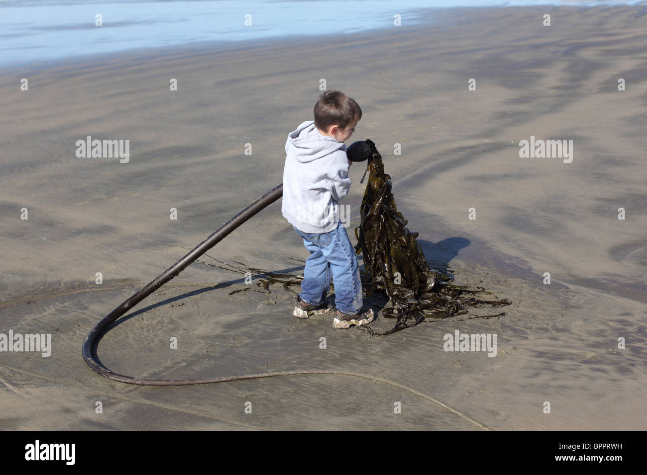 Young boy at beach picking up seaweed - Stock Image