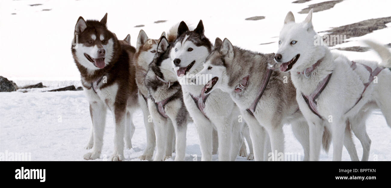 MAX OLD JACK & SHORTIE ETC. EIGHT BELOW; ANTARCTICA (2006) - Stock Image