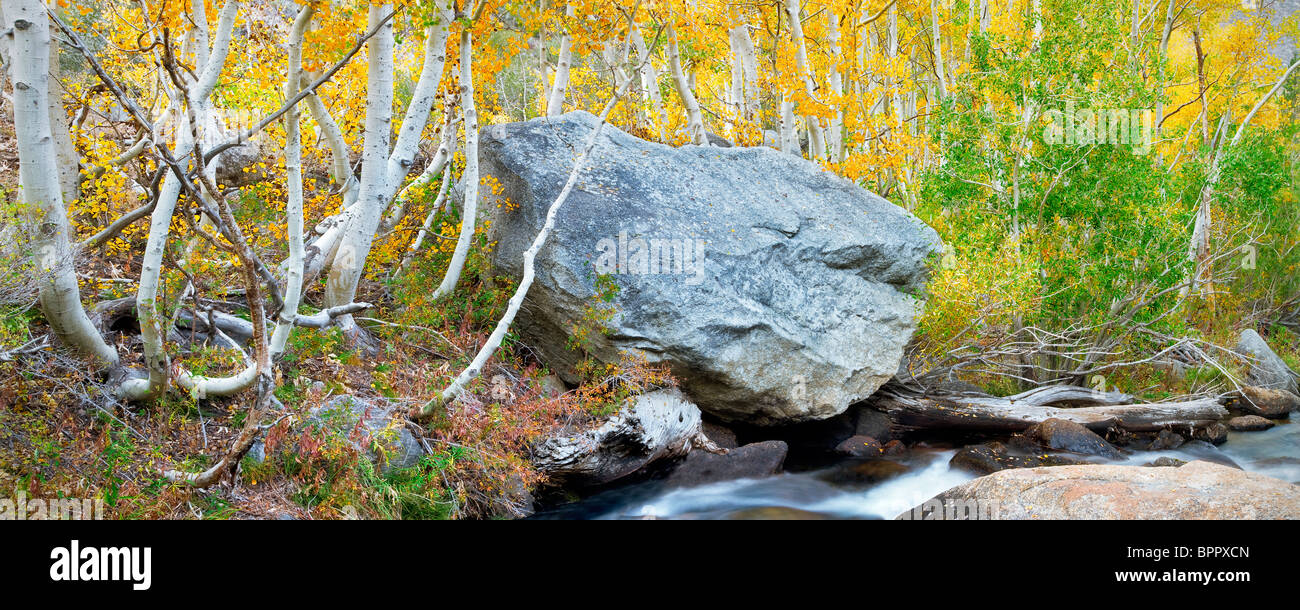 South fork Bishop Creek with fall colored aspens. Inyo National Forest. Eastern Sierras. California - Stock Image