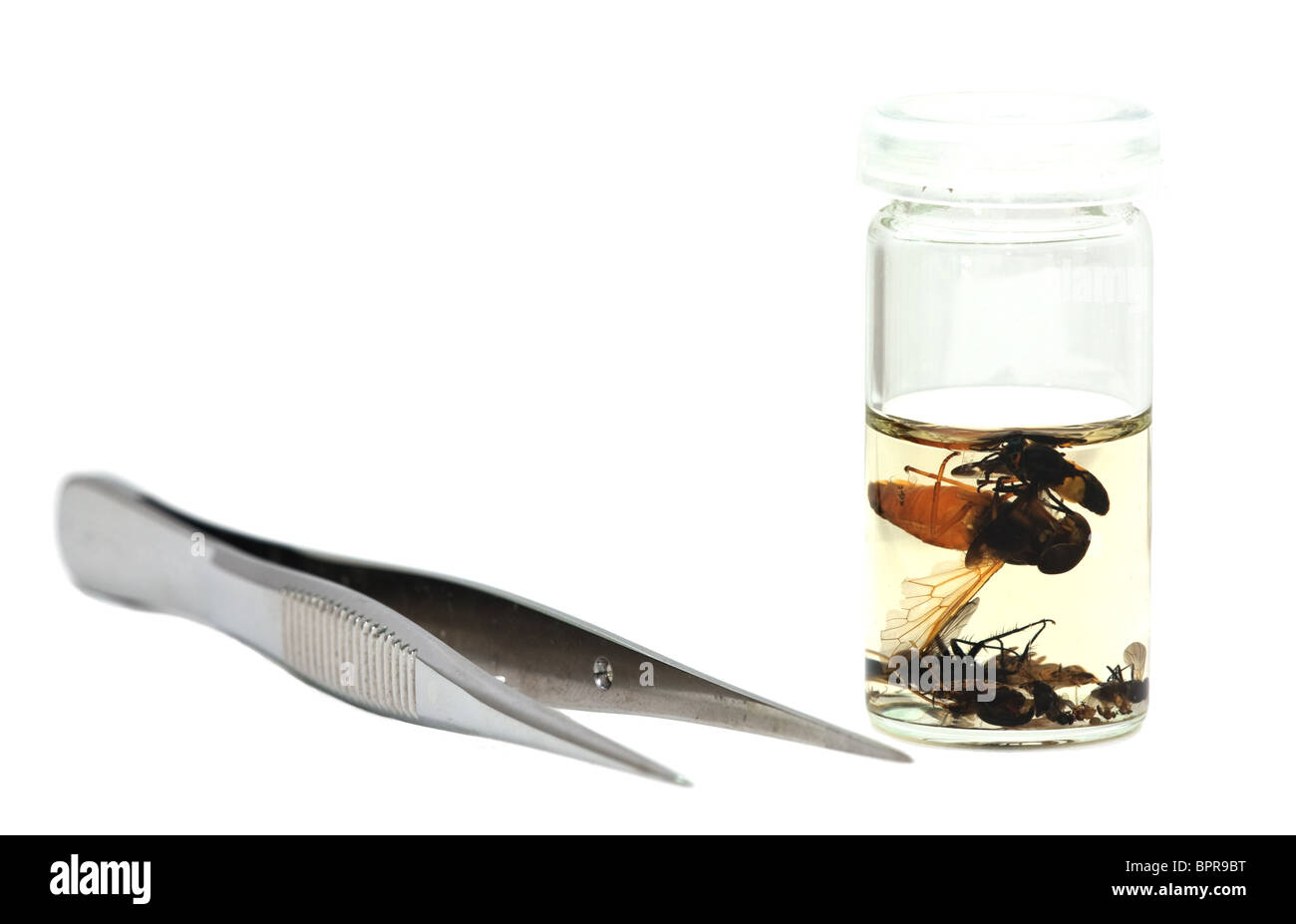 Isolated pincer and glass tube with insects on white. - Stock Image