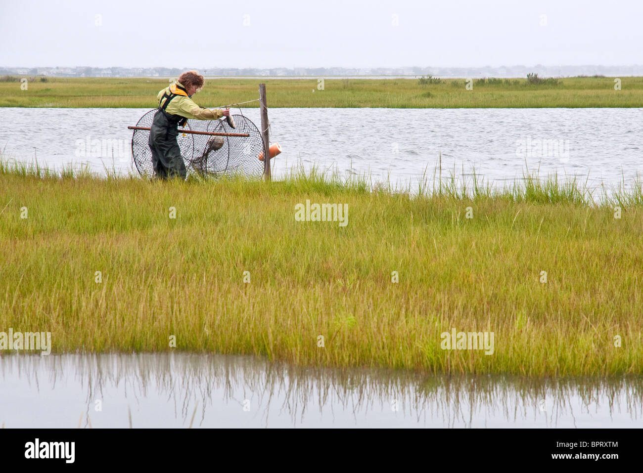Woman baiting a hoop net to catch turtles for scientific research - Stock Image