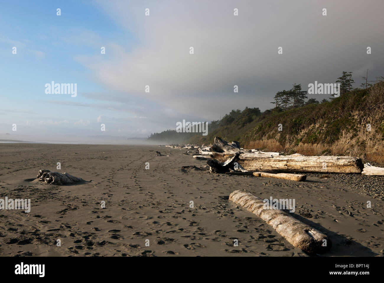 Timbers washed ashore on a beach, Olympic National Park, Washington, United States of America - Stock Image