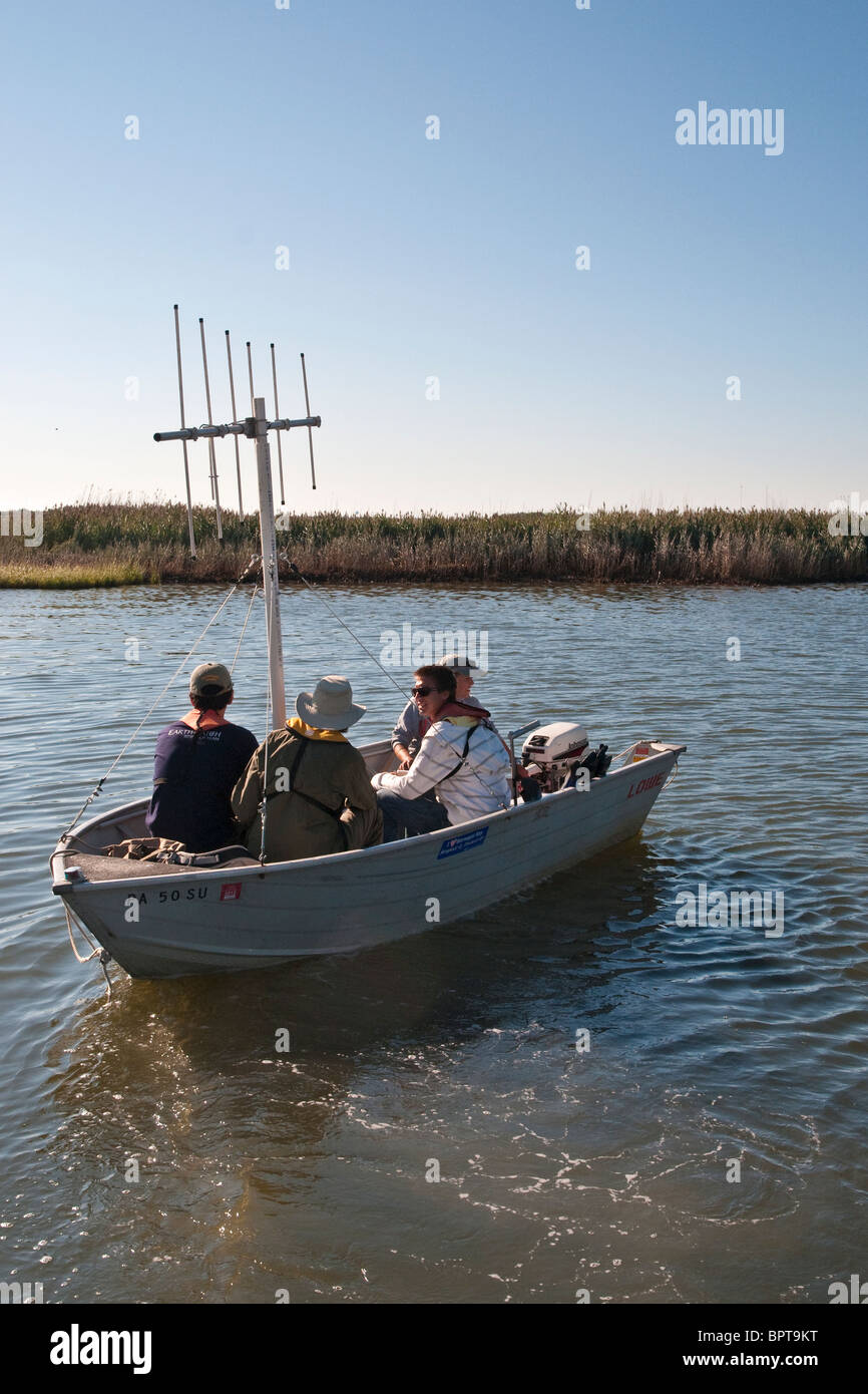 Boat fitted with radio tracking transmitter to track marine life - Stock Image