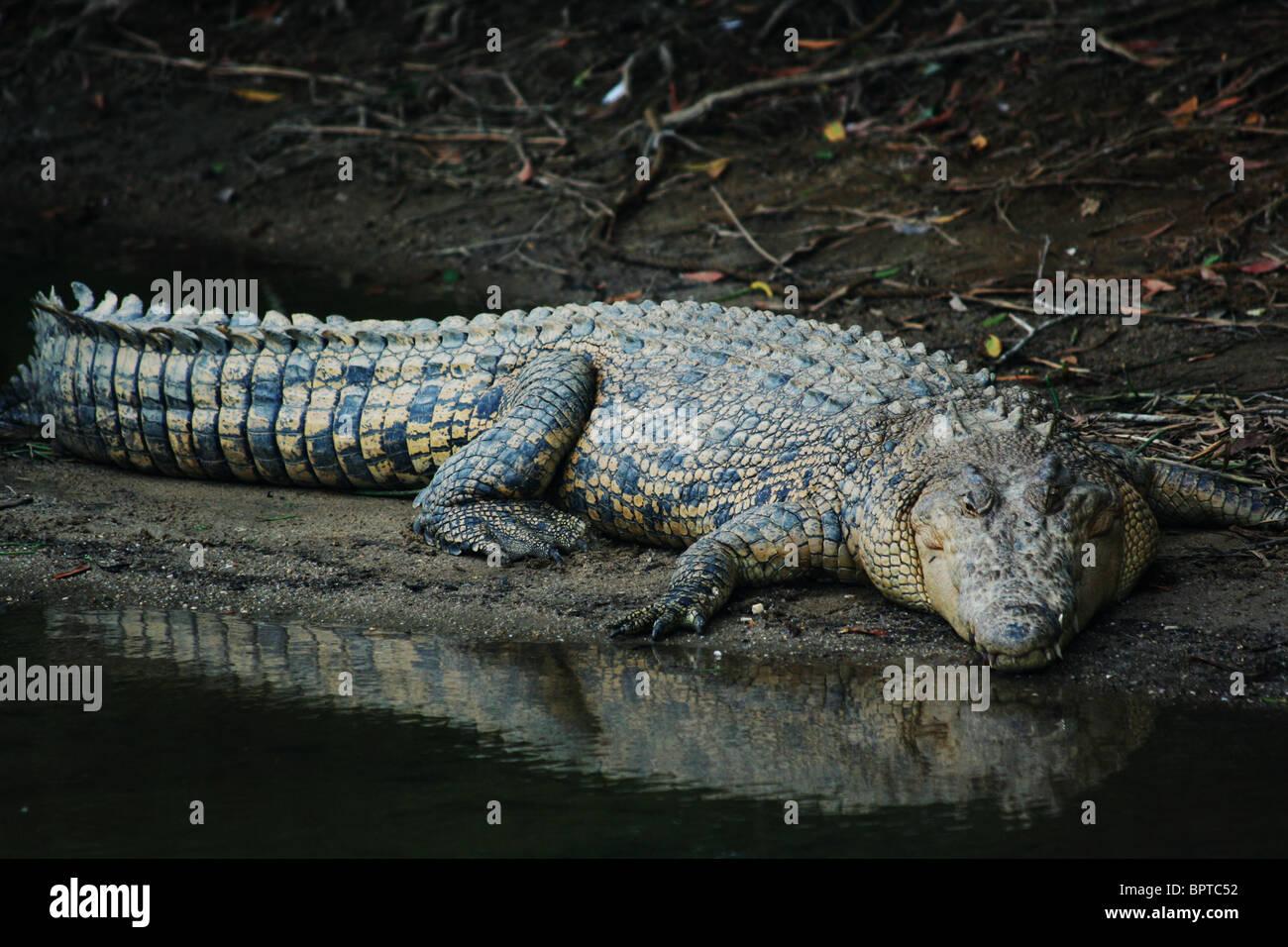Crocodile Tears Stock Photos Amp Crocodile Tears Stock
