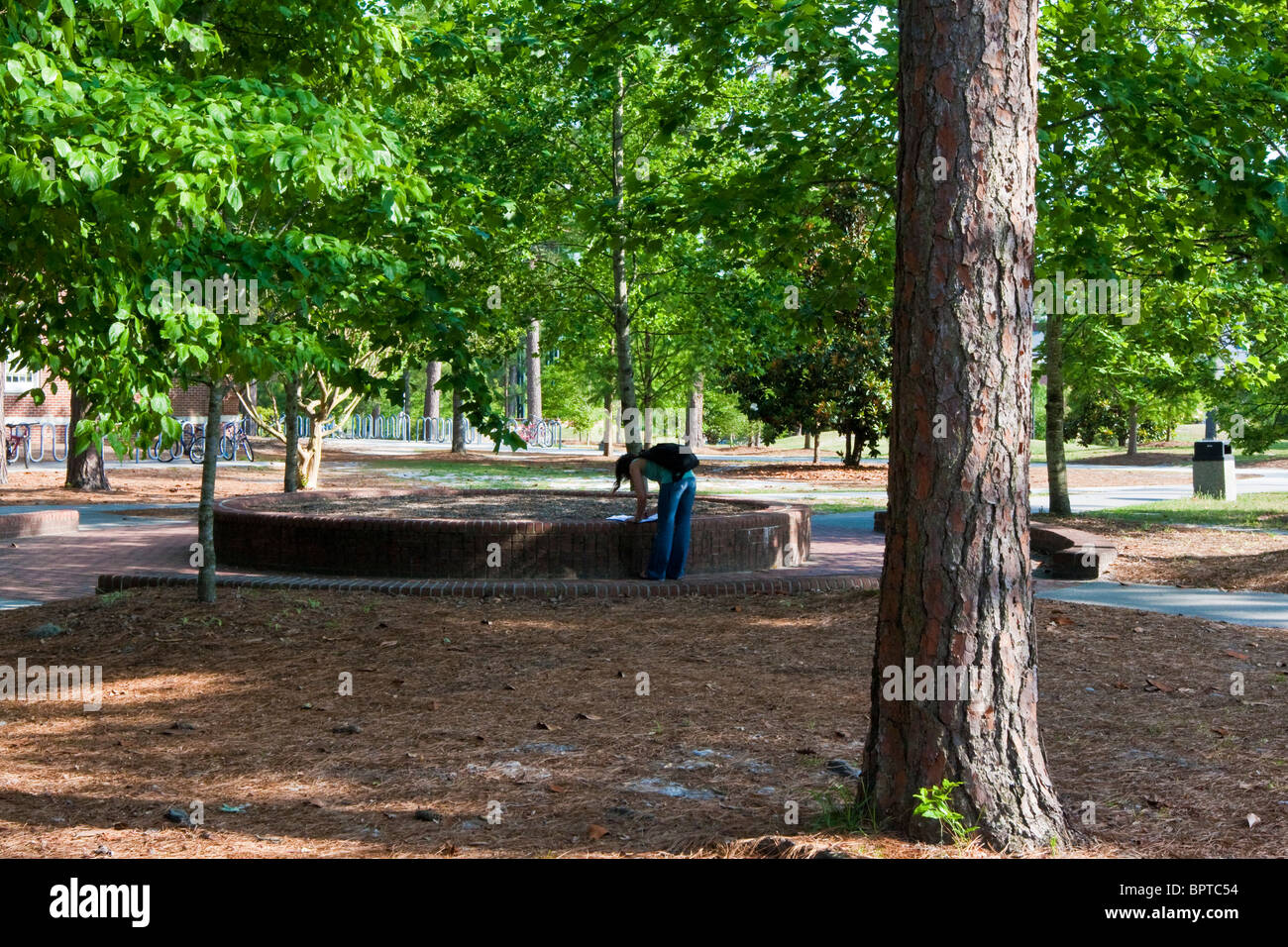 Lone student gets ready for class at the University of North Carolina, Wilmington. - Stock Image