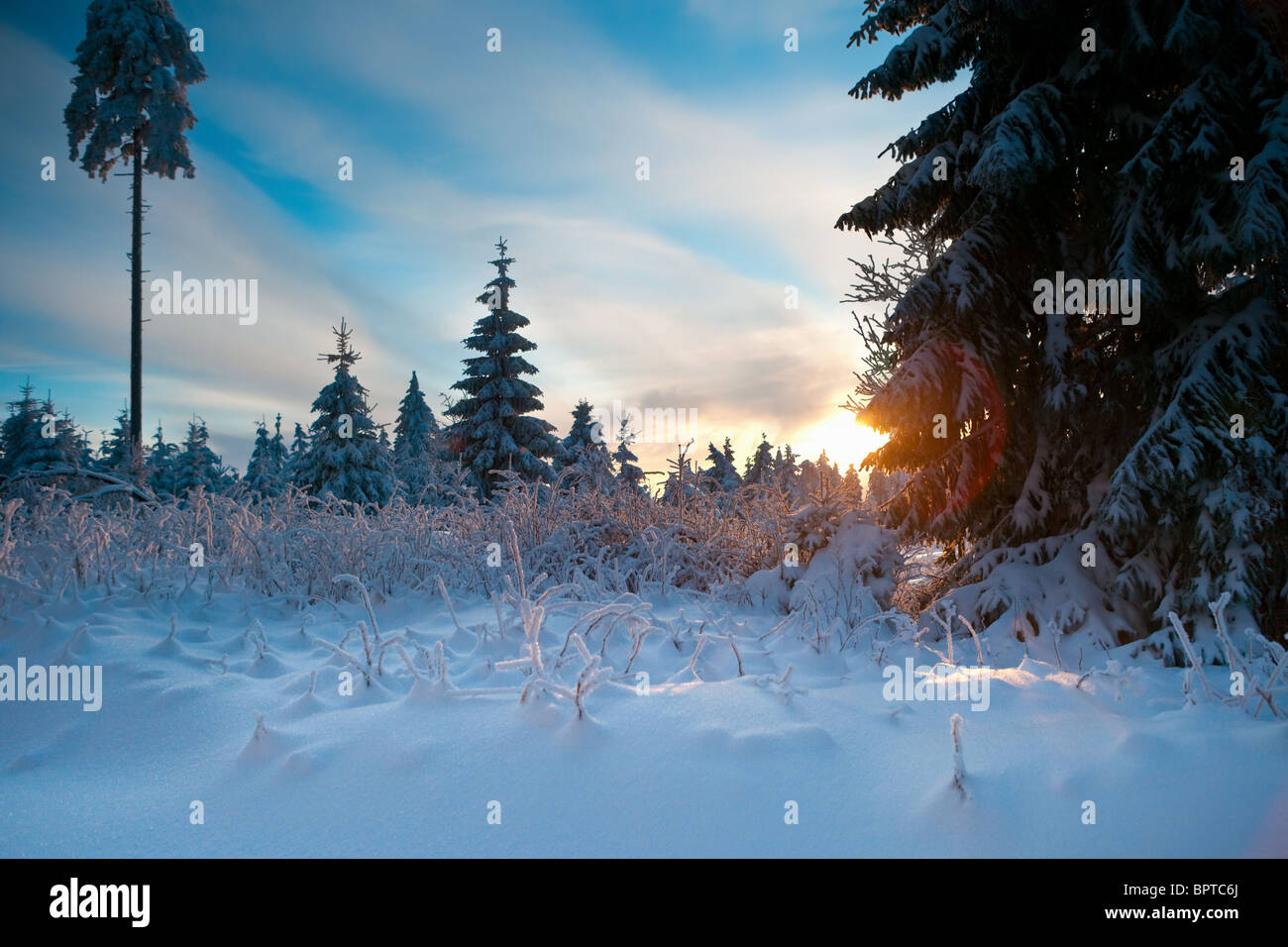 winter forest in Harz mountains Stock Photo