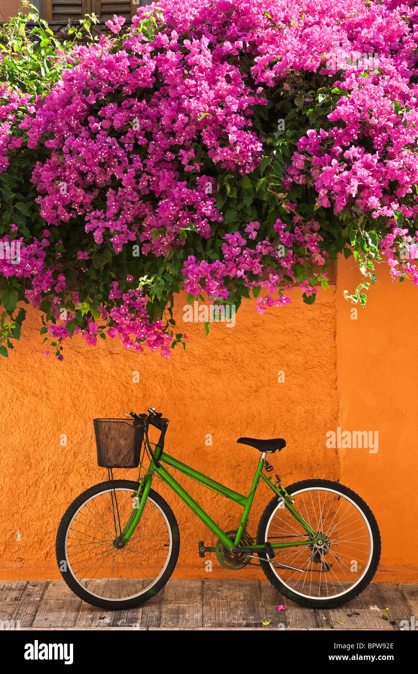 Pink bougainvillea in the old town of Nafplio, Greece's first capital after independence, Argolid, Peloponnese, - Stock Image