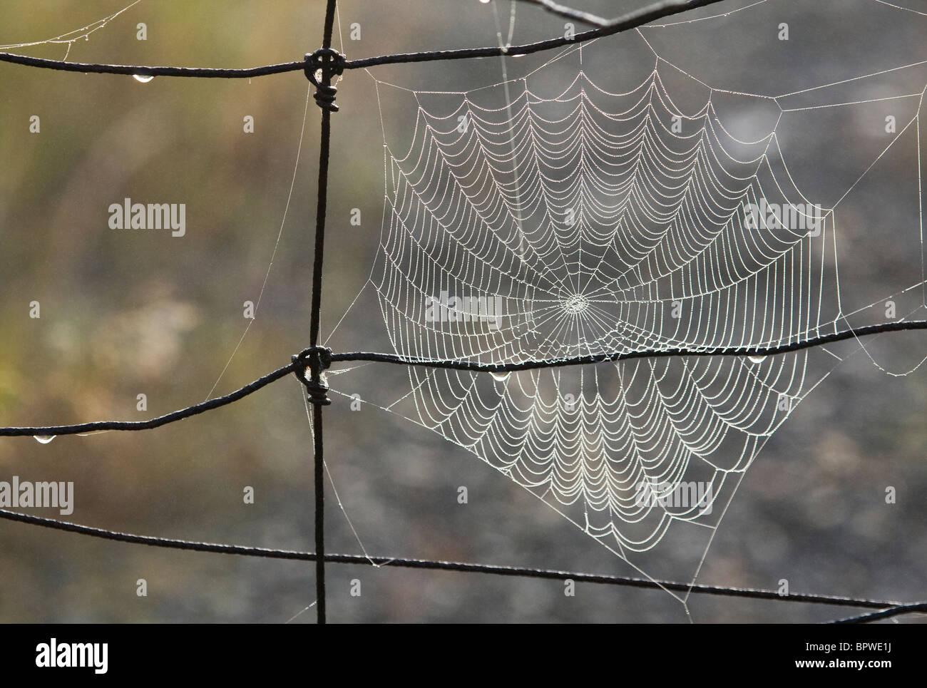 Spider's orb web on wire fence, Sudbury, Ontario, Canada. - Stock Image