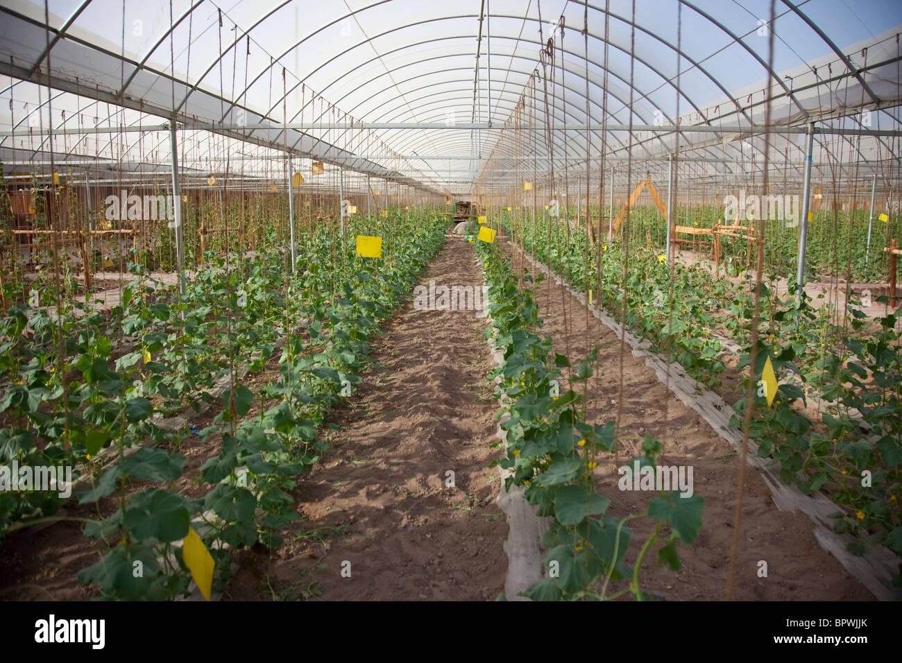 Green house in Turpan, Xinjiang, China. - Stock Image