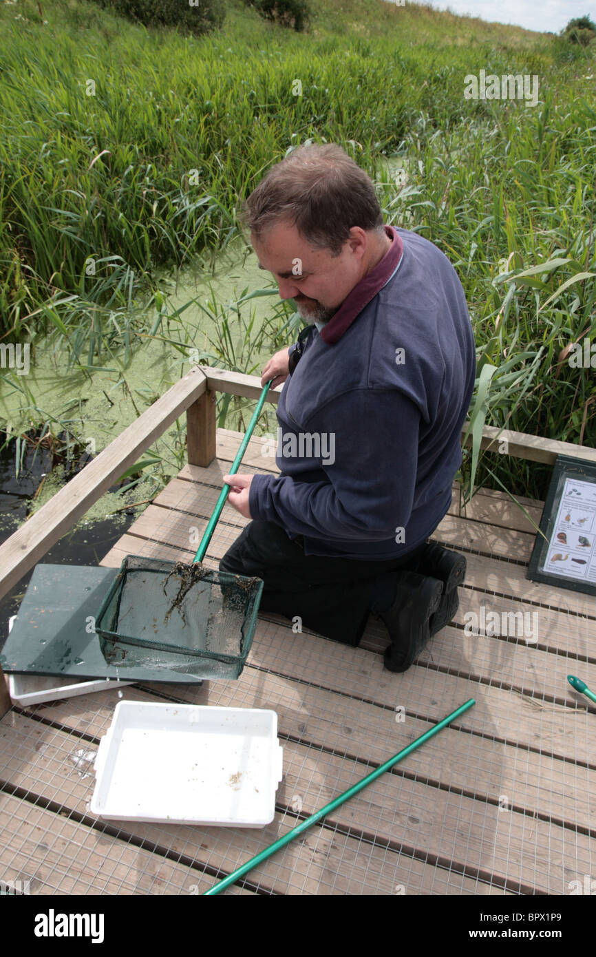 'Pond-dipping' - Stock Image