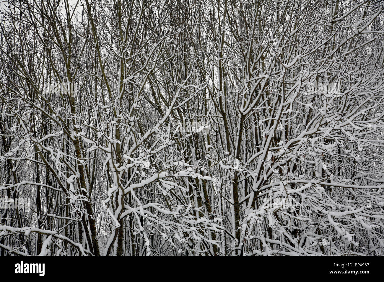 Frost covered foliage at Coate Water in Swindon. - Stock Image