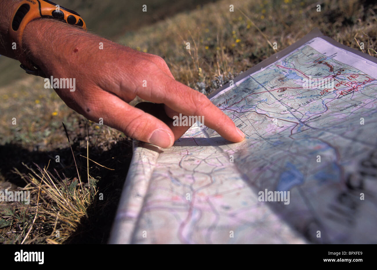 Man uses compass and topographic map to navigate in the mountains above Ouray, Colorado - Stock Image