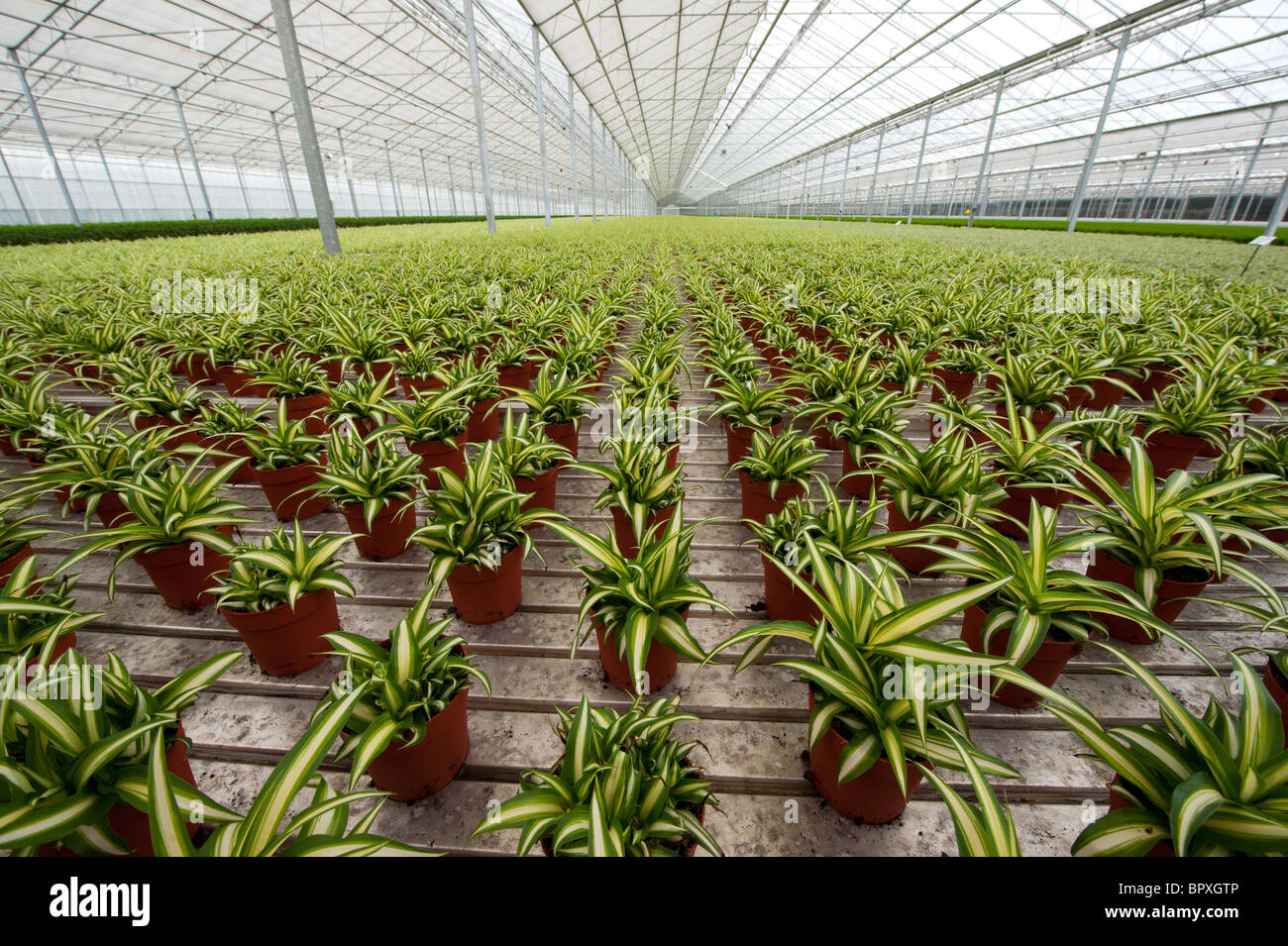 Diversity of plants in greenhouse - Stock Image