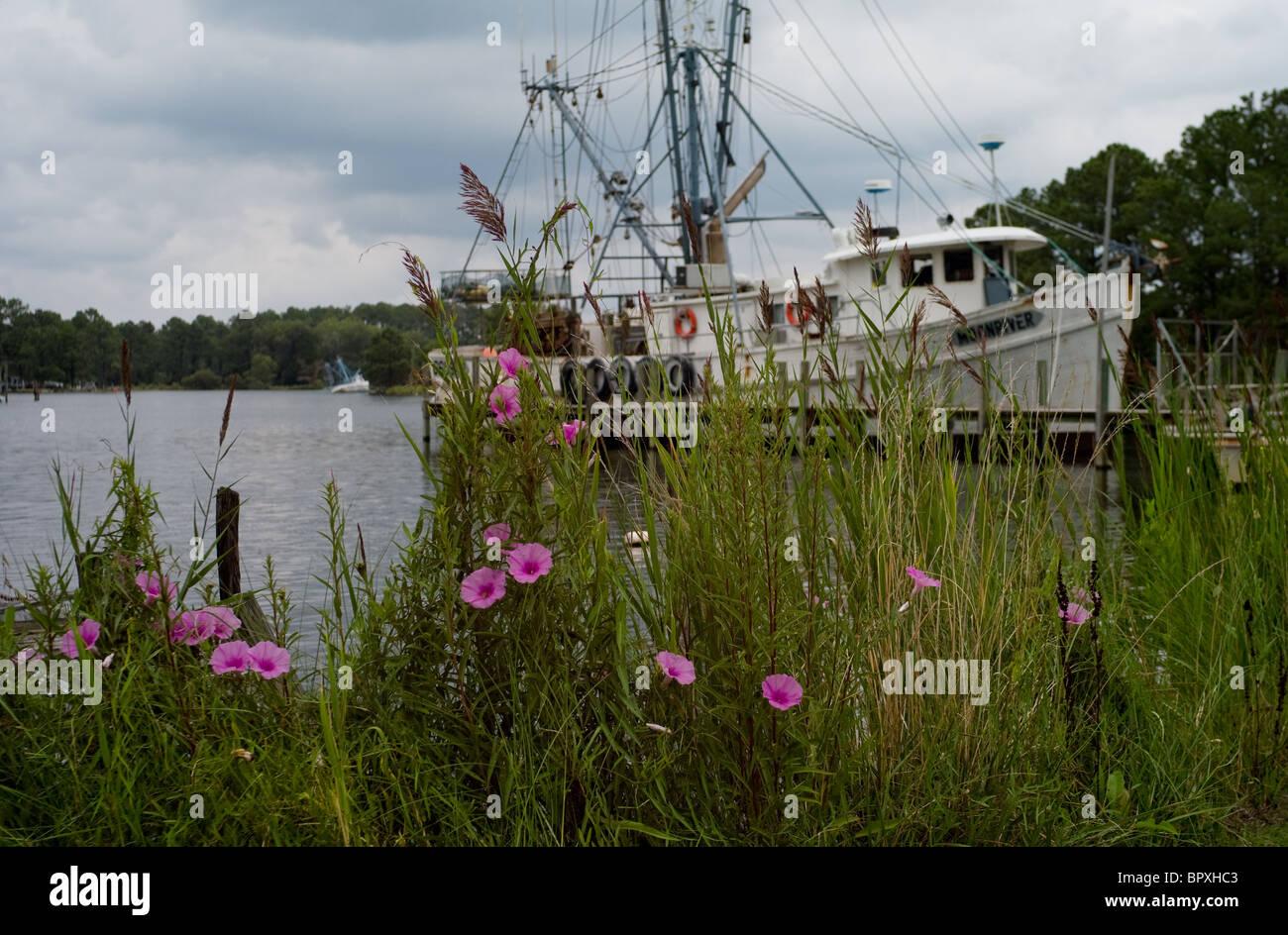 Shrimp trawler and morning glories in Pamlico Beach, North Carolina, USA. - Stock Image