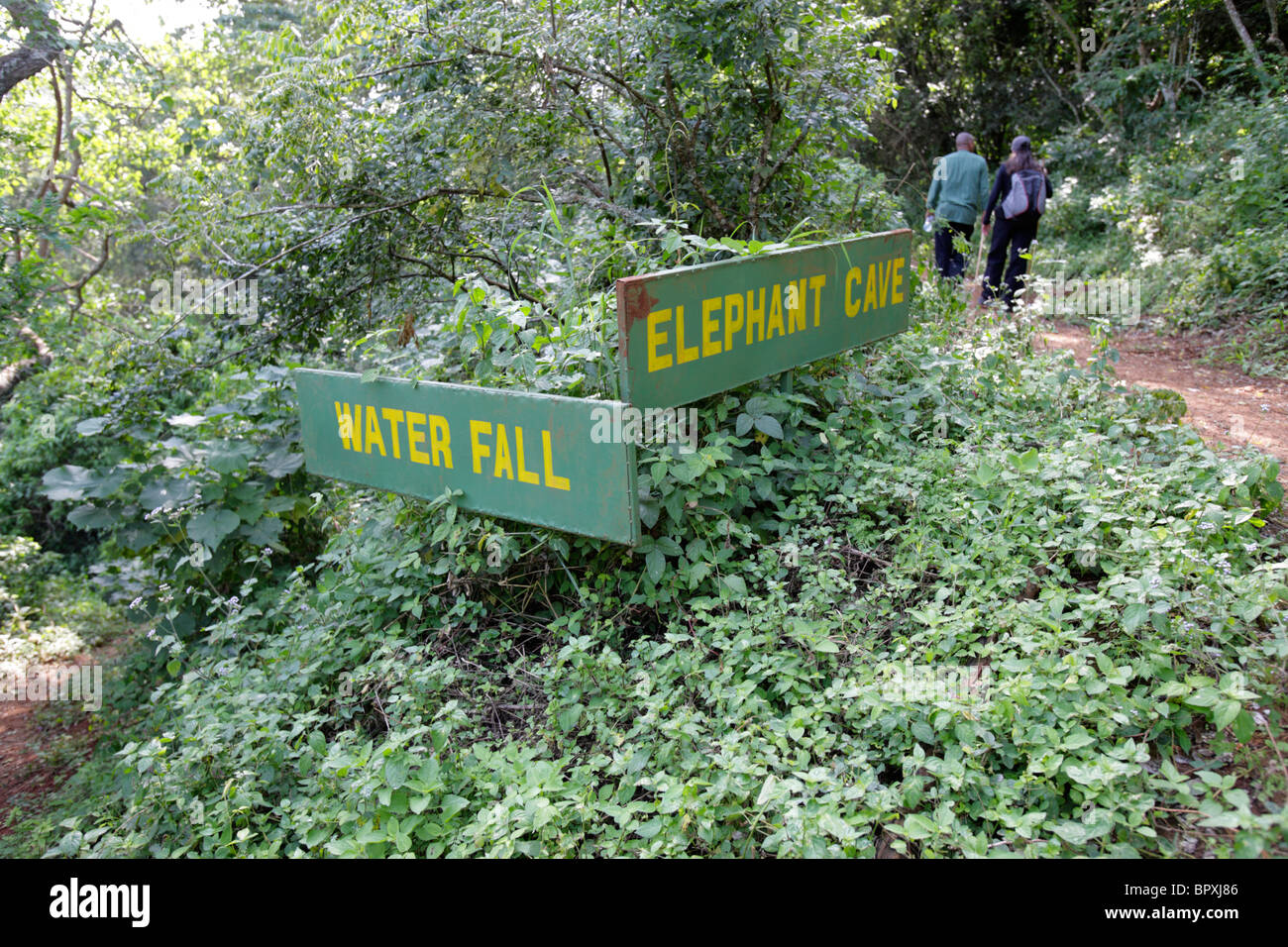 Roadsigns in the forest for Water Fall or Elephant Cave, Ngorongoro Conservation Area, Tanzania - Stock Image