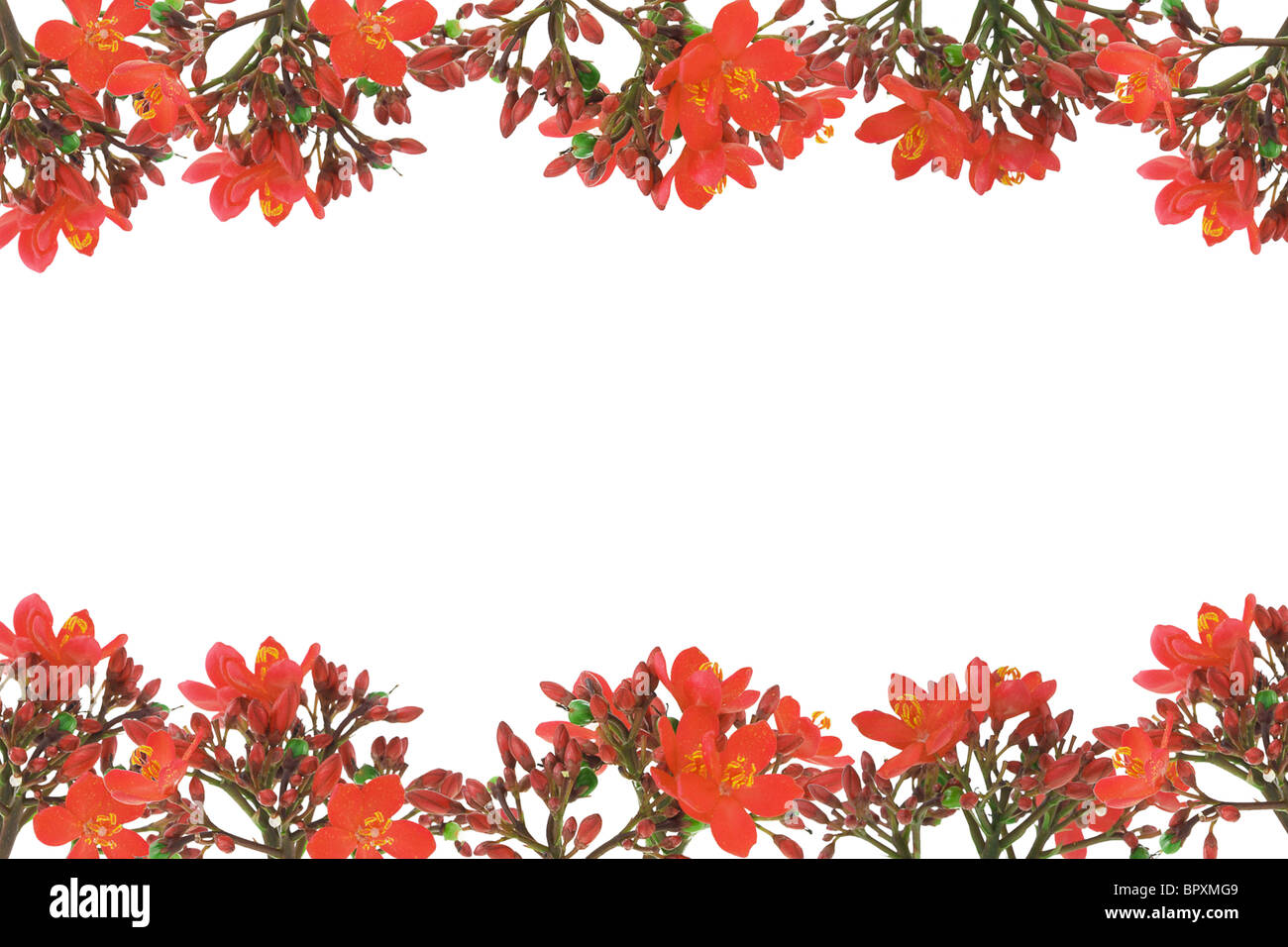 Red floral design border with copy space on white background - Stock Image