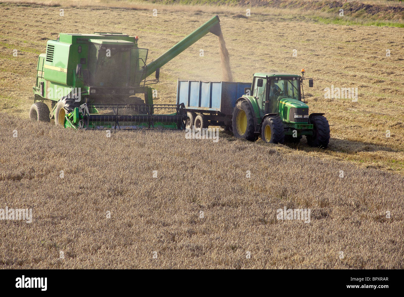 A combined harvester cuts wheat with a tractor and trailer to collect the grain. - Stock Image