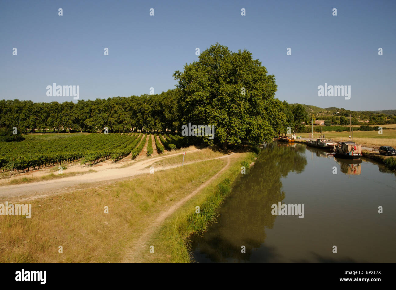 Vines grow close to the Canal du Midi at Argeliers in the languedoc Roussillon region of southern France Stock Photo