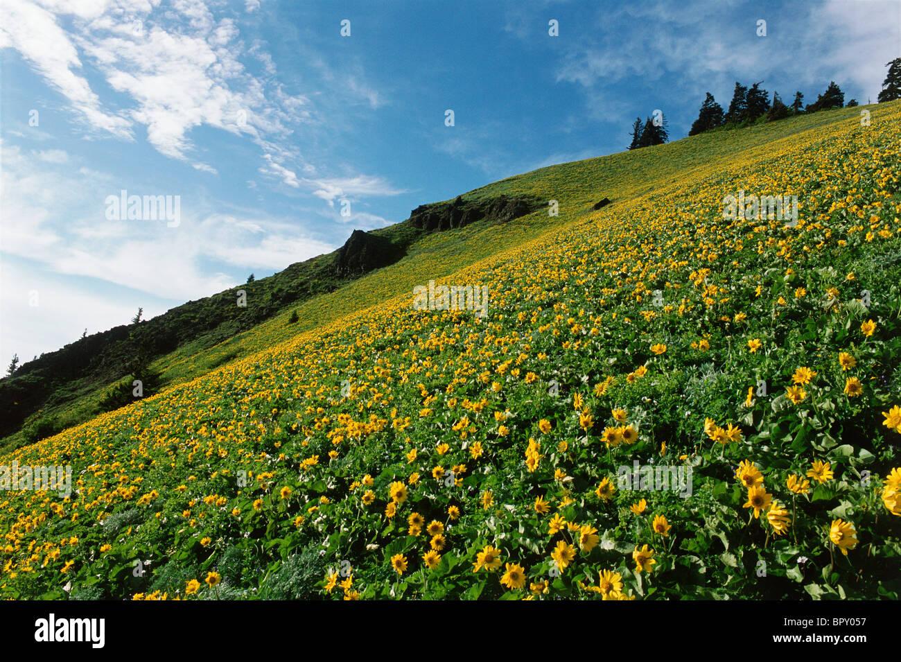 Landscpae - Stock Image