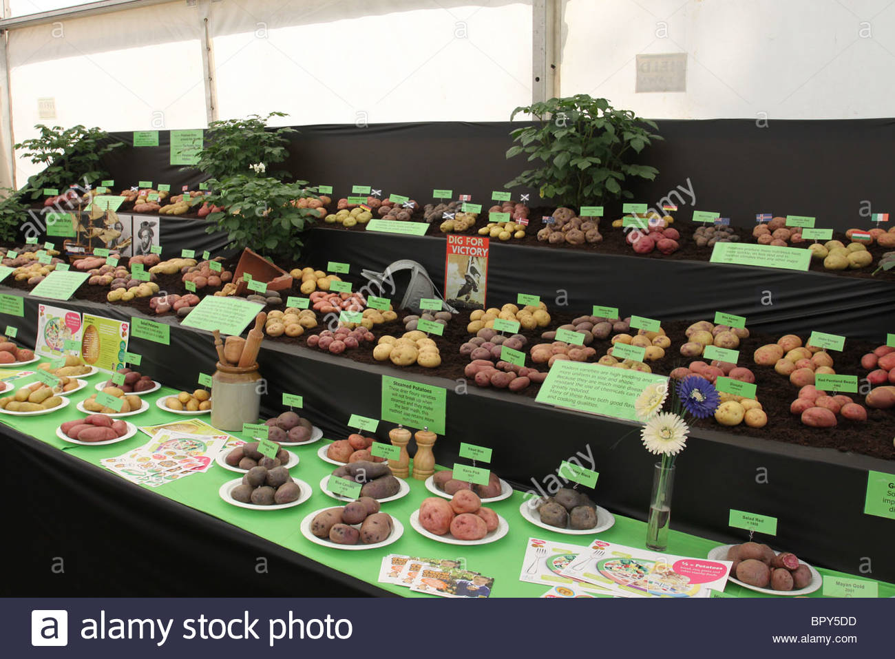 Potato display at Dundee Flower and Food Festival Scotland  September 2010 - Stock Image