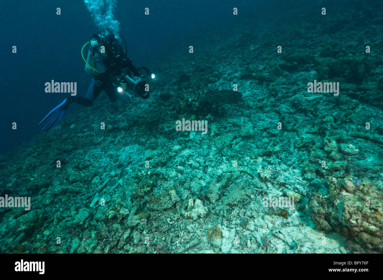 Diver with a video camera filming a reef destroyed by fish bombing, a destructive fishing practice, Biak, West Papua, - Stock Image